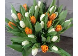 Bouquet de 30 tulipes