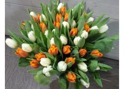 Bouquet de 50 tulipes